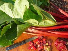 Rhubarb-Strawberry Zipzicle® Ice Pops - More ideas at zipzicles.com