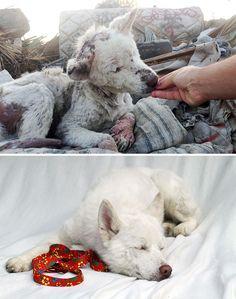 Diese 21 Bilder von Hunden bevor und nachdem sie von Menschen gerettet wurden zeigen was liebevolle Pflege für einen Unterschied für Hunde macht und wie sie von traurigen, verletzten zu überglücklichen Hunden werden! 1. Dieser Hund
