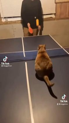 Animal Humour, Funny Animal Quotes, Funny Animal Videos, Funny Animals, Cute Animals, Kittens Cutest, Cats And Kittens, Cute Cats, Kliban Cat