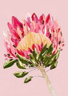 Poised to light up any room with sheer protea pleasure, Protea Party in blush pink will make anywhere spectacular. Poised to light up any room with sheer protea pleasure, Protea Party in blush pink will make anywhere spectacular. Watercolor Flowers, Watercolor Art, Protea Art, Gravure, Botanical Art, Art Inspo, Flower Art, Illustration Art, Animal Illustrations