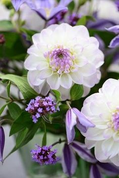 Purple and White Dahlia, Verbena Bonariensis, Clematis