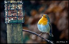 Robin - Viewing Lunch -
