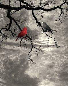 Birds on Tree Branch Beige Red Wall on Etsy