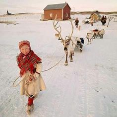 Reindeer and sweet girl leading them. Nordic Christmas.