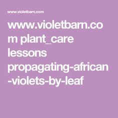 www.violetbarn.com plant_care lessons propagating-african-violets-by-leaf