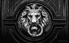 Tock Tock by Elias Gonzalez / Tatoo Art, Lion Tattoo, Lion Door Knocker, Greek Mythology Tattoos, Statue Tattoo, Paint Photography, Psy Art, Human Art, Animal Heads