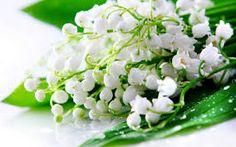 gigli fiori - Cerca con Google