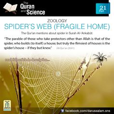 "Al-Qur'an al-Ankabut (The Spider) 29:41:  ""The parable of those who take protectors other than Allah is that of the spider, who builds (to itself) a house; but truly the flimsiest of houses is the Spider's house – If they but knew."""