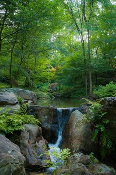 "nature-is-gorgeous: "" Garvan Woodland Gardens in Hot Springs, Arkansas, USA "" Beautiful Waterfalls, Beautiful Landscapes, Image Nature, Woodland Garden, Forest Garden, Nature Pictures, Amazing Nature, The Great Outdoors, Nature Photography"