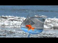 Programa Saber e Conhecer - visite nosso portal www.youtube.com\meupoder1