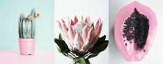bubble gum poison // knee deep in chic Bubble Gum, Bubbles, Pretty, Plants, Pink, Deep, Mood, Colour, Chic