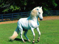 Шикарные лошади