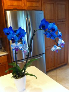 tattoos of blue orchids - Google Search