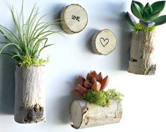 Set of 5 birch wood magnets 3 with succulent/ air plant 2 plain Living decor- magnets woodland favors// unique gift for any occasion