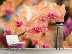 Foto #Tapete Exotische Orchideen