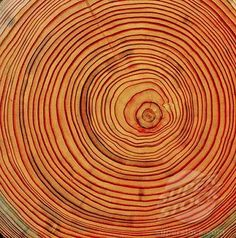 tree rings | wood, cross section, larch trunk, annual rings, tree, trunk structure ...