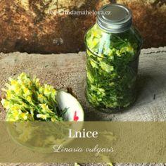 Pesto z bršlice Korn, Pesto, Pickles, Cucumber, Mason Jars, Gardening, Biology, Lawn And Garden, Mason Jar