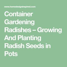Container Gardening Radishes – Growing And Planting Radish Seeds in Pots