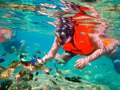 22-snorkelling-viatrekkingrinjani.wordpress