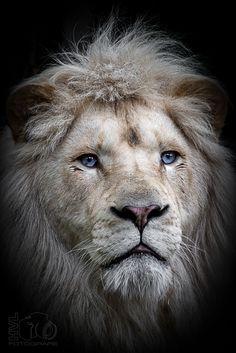 Photo King Credo... by Hermen van Laar on 500px
