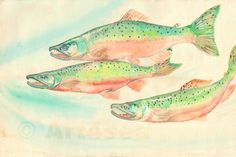 Fine Art Print of Three Coho Salmon - watercolor painting on archival art paper, or durable vibrant metal wall hanging(#80039) by art4sea on Etsy - https://www.etsy.com/shop/art4sea