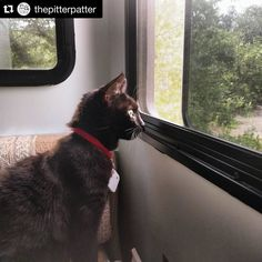 Purrfect! #Repost @thepitterpatter  Olivia is getting used to living in an RV. We got her a Tile since she's been hiding a little too well. #tiledit  www.thetileapp.com