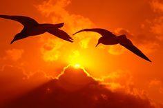 Υπάρχουν άνθρωποι στη ζωή μας… που μας κάνουν ευτυχισμένους… απ΄την απλή σύμπτωση να συναντηθούν τα μονοπάτια μας… Κάποιους τους έχουμε σε ολη τη διαδρομή στο... Celestial, Sunset, Animals, Outdoor, Life, Psychology, Sunsets, Animales, Outdoors