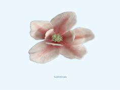 Subliminals - Magnolia