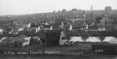 """A few weeks growth"", Weyburn, Saskatchewan. Saskatchewan Canada, North Country, Minnesota, Dolores Park, Photo Galleries, Old Things, Prince Albert, History, Gallery"