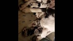 Help Save Dolly and her 9 Puppies