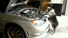Subaru Dogs