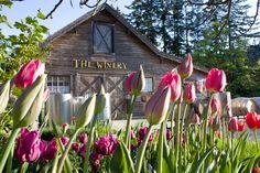 starling lane winery - Victoria, B.C. A great wedding location!/Vancouver Island Weddings