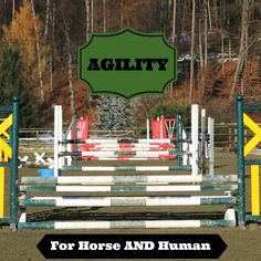 Agility training is often thought of as a kind of training for tennis players, ball players and track skills. Not true! There is actually a place for agility training in a rider fitness program! Agility training improves timing, rhythm and quality of movement-all of which are keys to coordination in any athletic movement. Agility training improves body control and body awareness which contributes to heightened athletic performance. For the Horse: I can't think of a more valuable training…