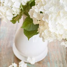How to {Care} for {Freshly-Cut Hydrangeas!}