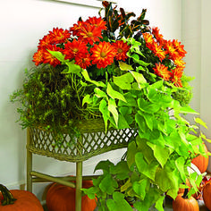 1000 images about container garden on pinterest for Spell balcony