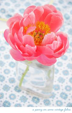 gorgeous coral peony - would be lovely to just have a bundle of these sitting at my desk one day. #dreamin