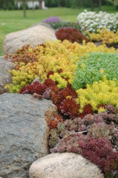 Few plants can compete with sedums for sheer range of colors and versatility, not to mention beauty.