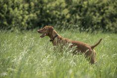 Winston Dog Days, Dogs, Animals, Animales, Animaux, Pet Dogs, Doggies, Animal, Animais