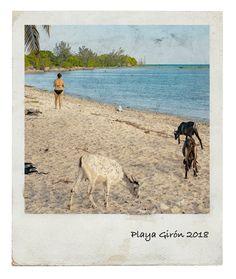 Segunda parte da viagem por Cuba, uma curta passagem por Cienfuegos a caminho do objectivo principal da viagem, mergulhar em Playa Girón! India Travel, Us Travel, Travel Tips, Cienfuegos, Cuba, Latin America, South America, Best Places To Travel, Places To Visit