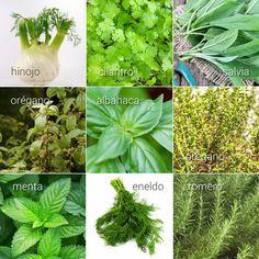 hierbas aromáticas: su uso en la cocina.