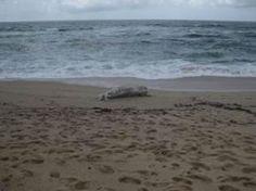 Banhistas desaconselhados de tomarem banho nas praias da Póvoa