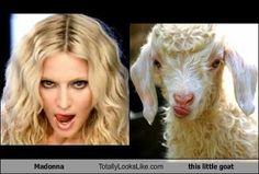 funny look alikes | Funny Look Alikes - Visboo.com
