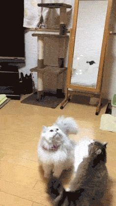 Best Cat Gifs of the Week #14 - We Love Cats and Kittens