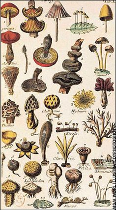 Botanical illustration from a book review of Flower Hunters. The book covers botanist, physician, and zoologist Carl Linnaeus (Swedish, 1707–1778), and other early botanical hunter-gatherers. The illustration is taken from Systema Naturae by Linnaeus, printed in the Netherlands in 1735