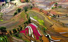 Thierry Bornier took this amazing photograph of terraced rice fields in Yunnan, China. The aerial view of the different sections of the rice fields shows a wide range of colors, and National Geographic chose it as Photo of the Day on June Places To Travel, Places To See, Tourist Places, Travel Destinations, Beautiful World, Beautiful Places, Amazing Places, Beautiful Scenery, Places Around The World