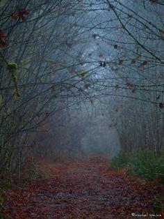 The Dark Forest 11X14 Foggy Forest Print by machelspencePHOTO, $25.00