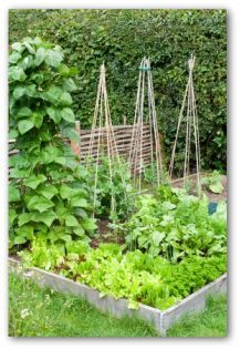How to Create a Raised Bed Vegetable Garden