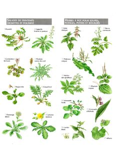 Edible Garden 29233 Small atlas of edible plants - Yog La Vie! Edible Wild Plants, Plant Aesthetic, Plant Identification, Survival, Atlas, Plant Drawing, Wild Edibles, Plant Illustration, Plantar