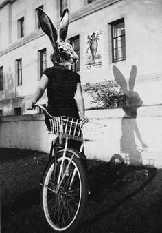 bicycle bunny