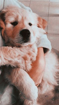 Dog And Puppies Memes .Dog And Puppies Memes Walpapers Cute, Cute Dog Wallpaper, Puppies Wallpaper, Cute Dogs And Puppies, Doggies, Best Dog Breeds, Cute Dogs Breeds, Best Dog Training, Cute Baby Animals